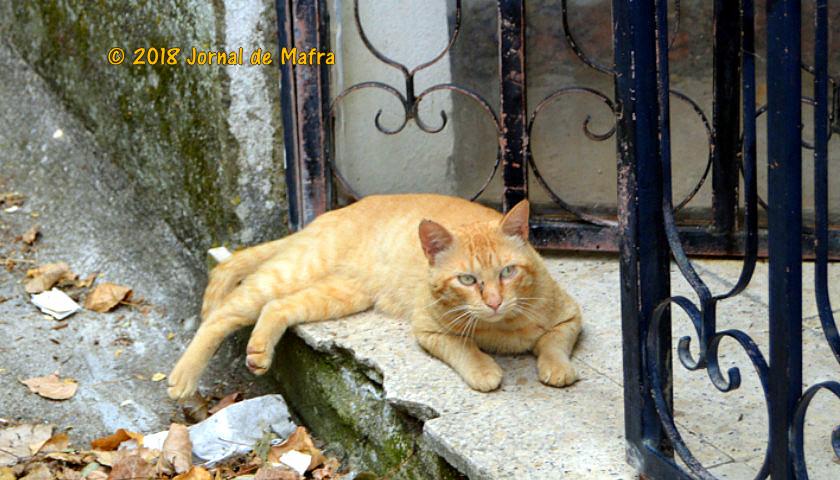 Em comemoração ao Dia internacional da Loja Gato