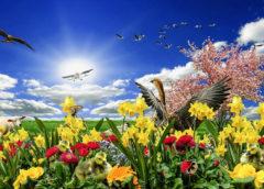 Chega hoje a Primavera